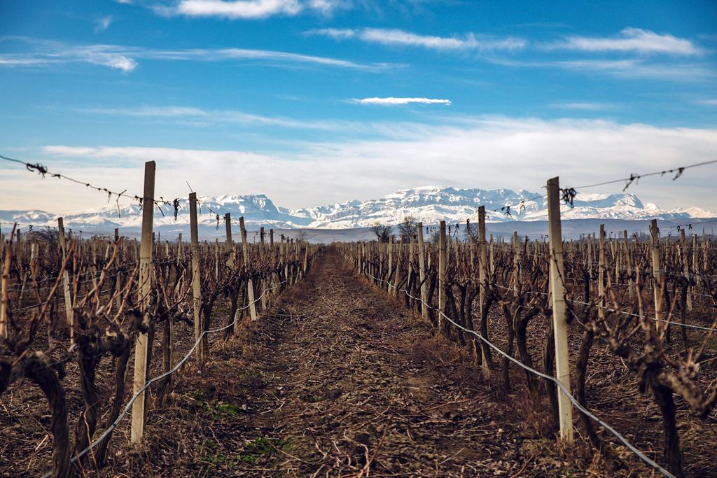 «Абрау-Дюрсо» отныне использует только российский виноград