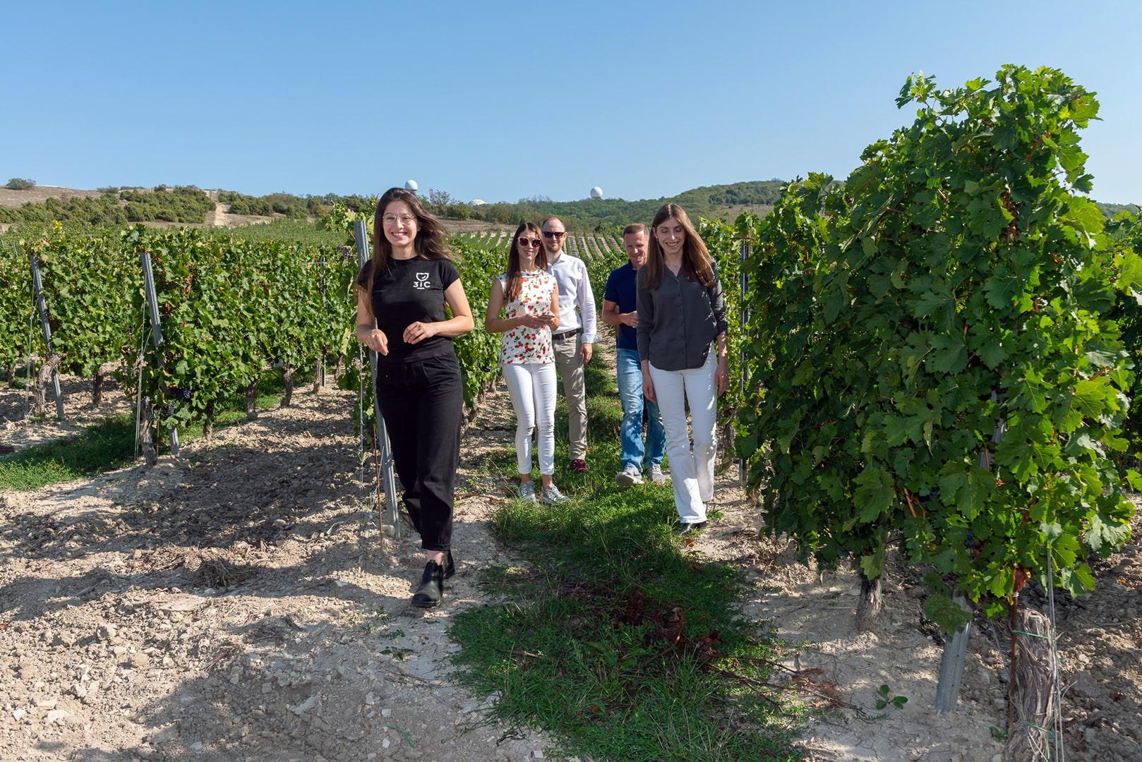 На винограднике Скалистый берег