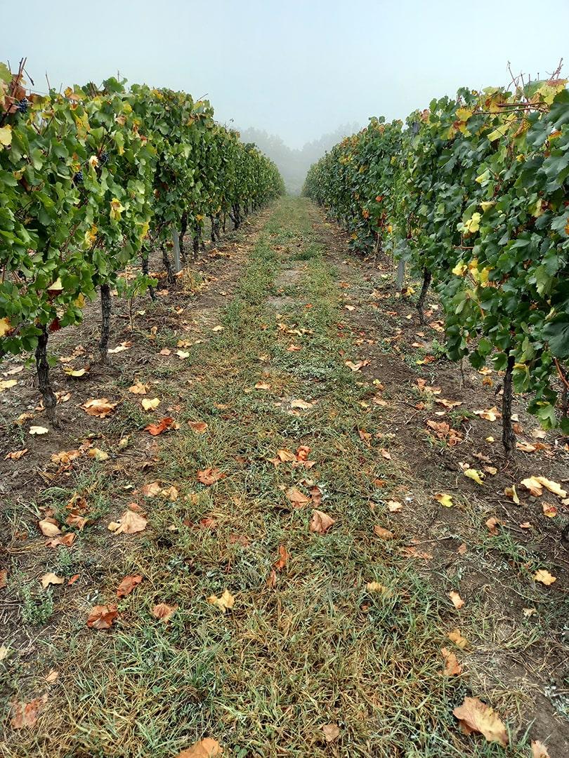 Собер-Баш - премиальный виноградник неподалеку от Краснодара