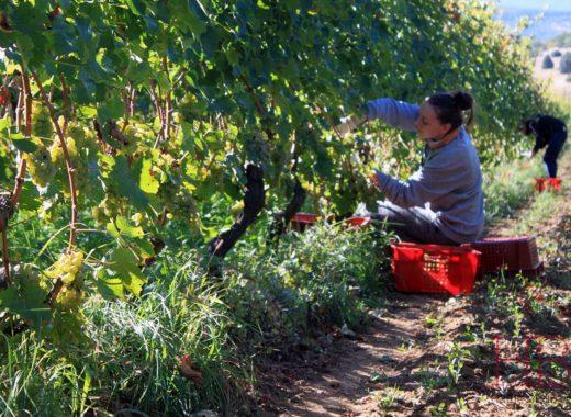Девятый курс сомелье в Севастополе осенью-2020.<br>Все о вине за 46 дней в бархатный сезон у Черного моря!