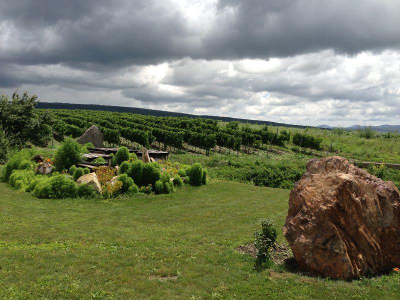 Виноградник и каменюка