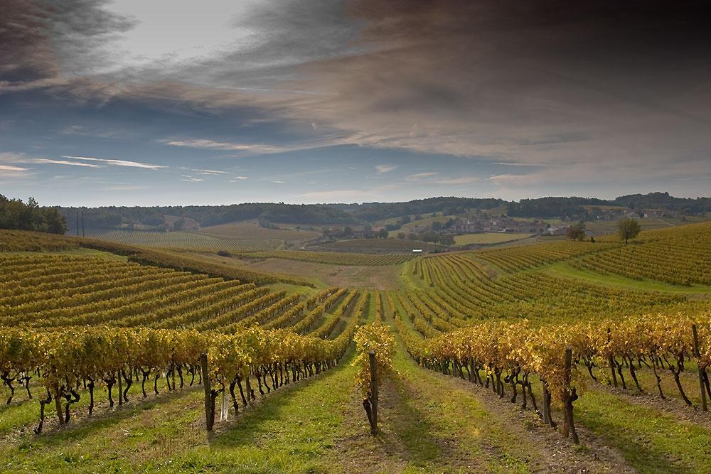 Крым - самый большой по площадям регион виноградарства России
