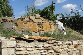 Террасный виноградник Лукьянова в Цимлянске