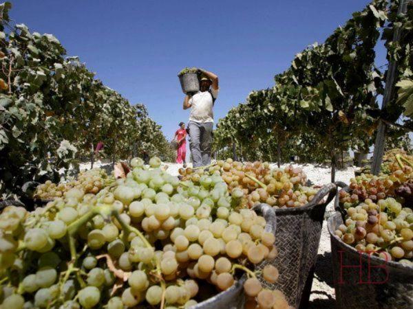 Сбор урожая в Дербенте