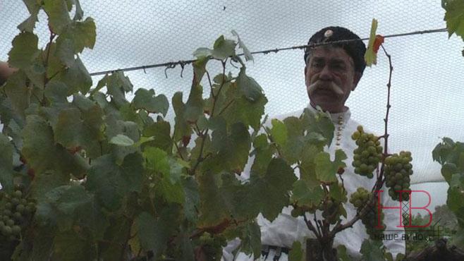 Винодельческая Россия, взгляд из зарубежья