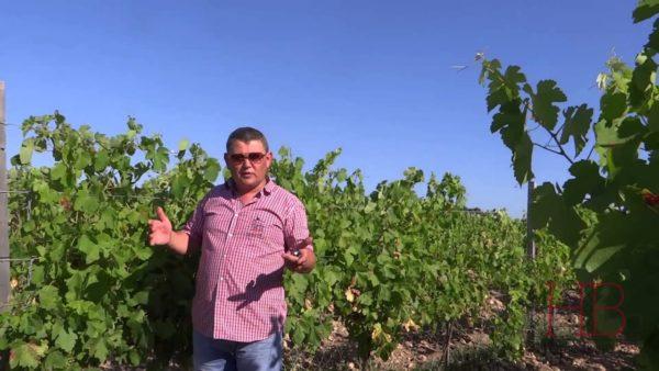 Олег Репин на виноградниках долины Бельбека