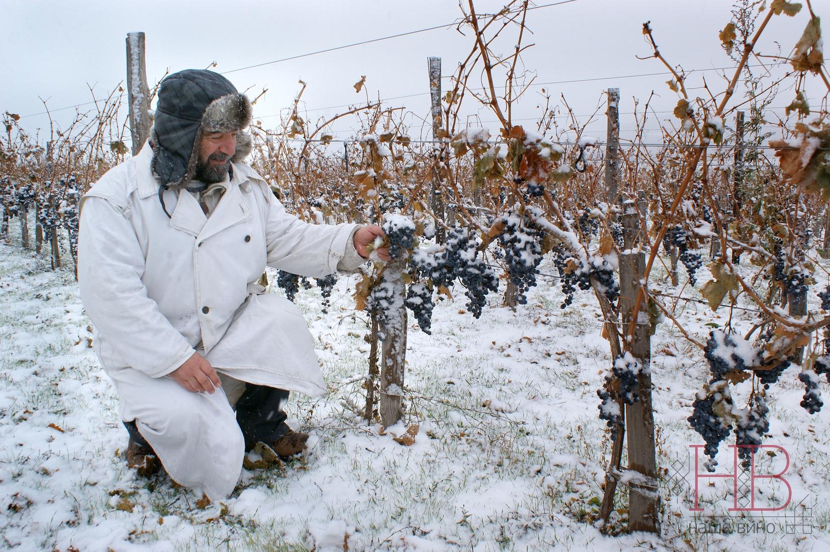 Виноградник Яниса Каракезиди