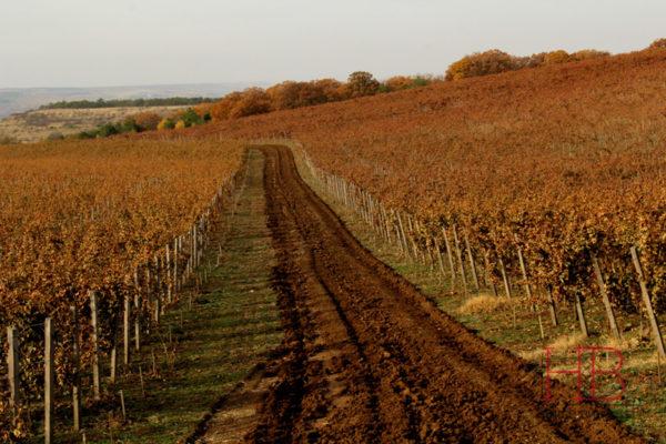 Виноградники раскинулись на плато в глубине Качинской долины
