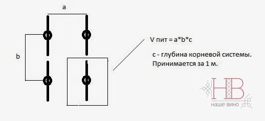 Рис. 3. Определение площади питания виноградного куста