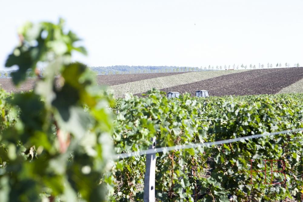 Виноградники Лефкадии