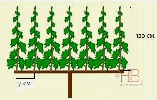 Рис. 7 Пример хорошо сформированной лозы