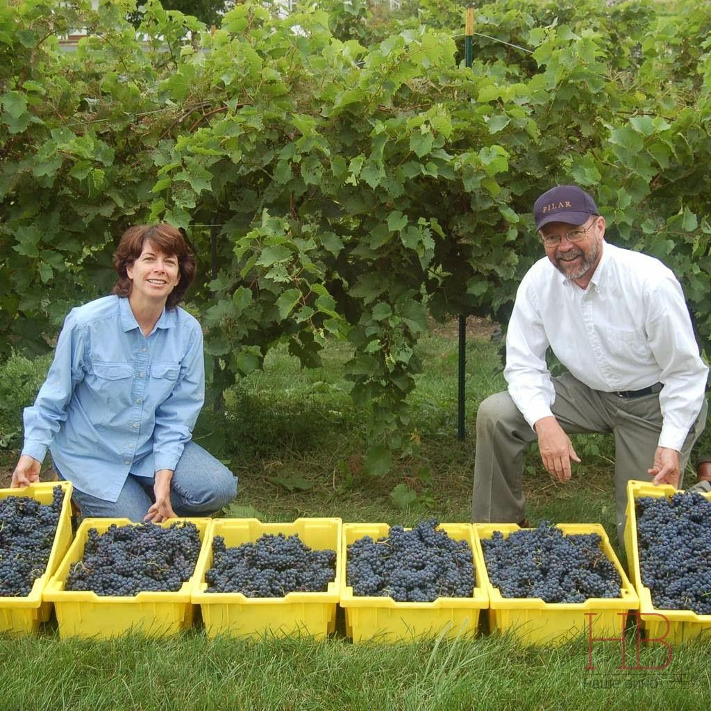 Многие виноделы США работают с гибридными сортами. На фото Victory View Vineyard, штат Нью-Йорк