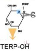 Рис.2 Действие фермента β-глюкозидазы на комплекс глюкоза – терпеновый спирт с высвобождением последнего.