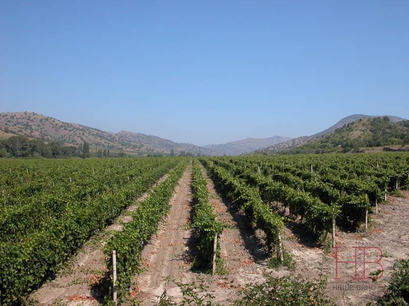 Виноградники Старого Крыма