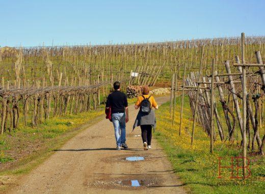 Конкурс виноделов «Молодая Лоза» привлекает европейских партнеров